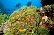 Red Sea Diving (Hurghada)